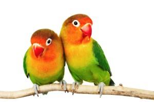 Psicologos especialistas en terapia individual y de pareja.